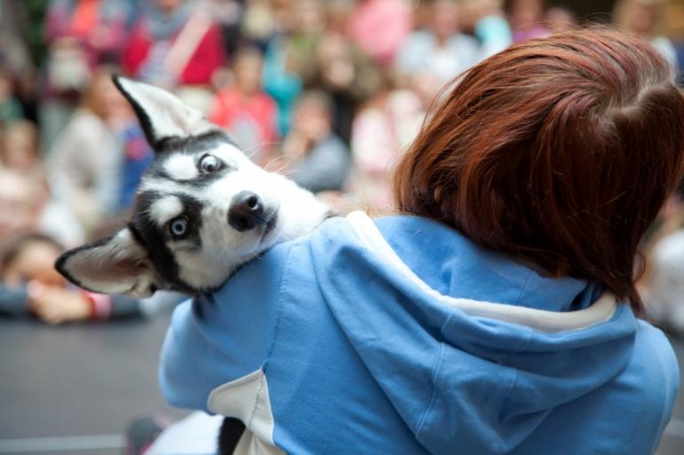 Festival zvierat
